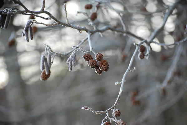 Nature Art Print featuring the photograph Frost by Peter McIntosh