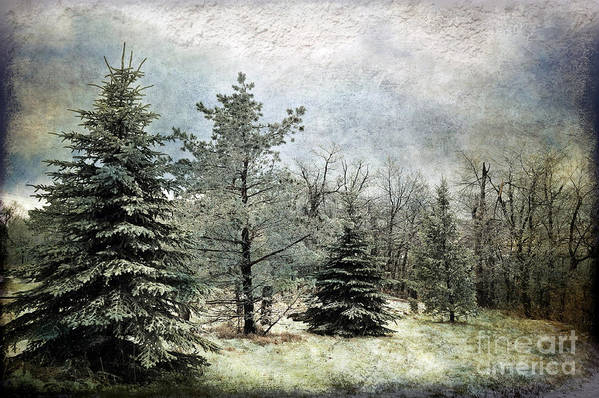 Snow Art Print featuring the photograph Frosty by Lois Bryan
