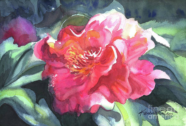 Camellia Art Print featuring the painting Full Blown by Karen Winters