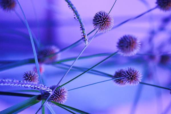 Nature Art Print featuring the photograph Funky Weeds by Trudi Southerland