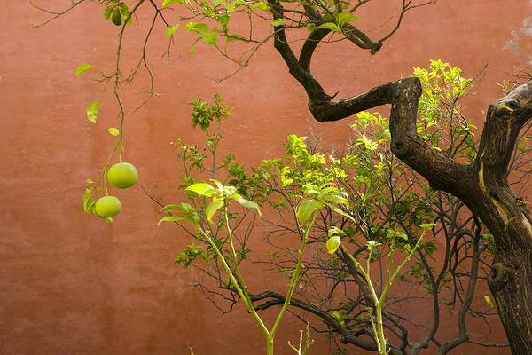 Nature Art Print featuring the photograph Garden Of The Alcazar by Jan Kapoor