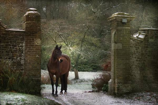 Horse Art Print featuring the photograph Gate To Another World by Dorota Kudyba