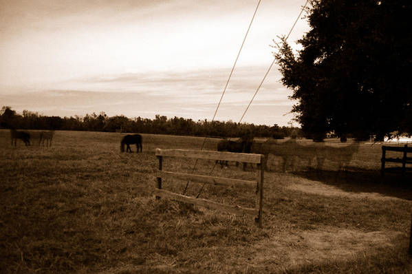 Horses Art Print featuring the photograph Ghost Horses Of Huckleberry Lane by Heather S Huston