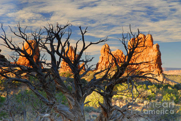 Arches Art Print featuring the photograph Glove Rock by Dennis Hammer