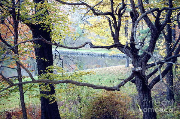 Tree Art Print featuring the photograph Gnarly by Faith Harron Boudreau