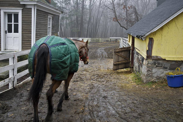 Horse Art Print featuring the photograph Going Home by Jack Goldberg