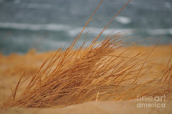 Beach Art Print featuring the photograph Golden View by Catherine Reusch Daley