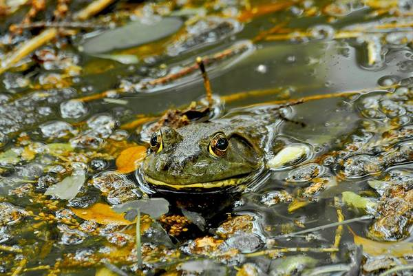 Frogs Art Print featuring the photograph Good Morning by Donna Shahan