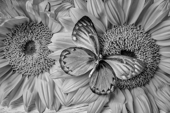 Gorgeous Butterfly On Sunflowers Black And White Art Print By Garry Gay