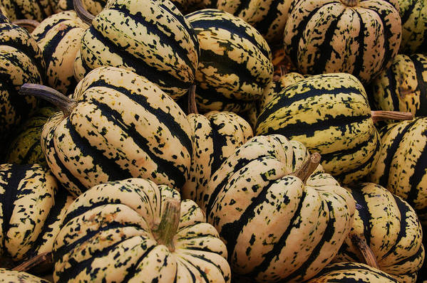 Squash Art Print featuring the photograph Gourds In White And Green by Jame Hayes