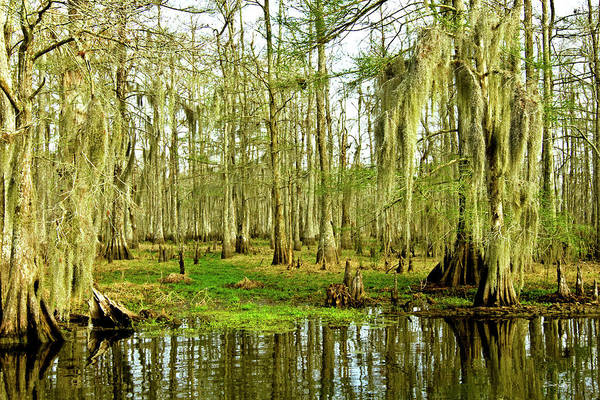 Swamp Art Print featuring the photograph Grand Bayou Swamp by Scott Pellegrin
