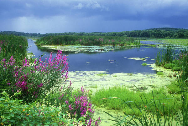 Great Meadows National Wildlife Refuge Art Print featuring the photograph Great Meadows National Wildlife Refuge by John Burk