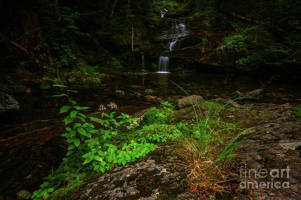 Water Art Print featuring the photograph Green Cascade by Joe Comeau