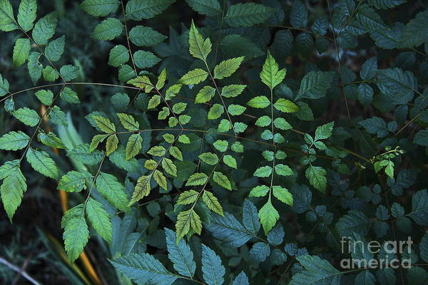 Nature Art Print featuring the photograph Green Leaves by Viktor Savchenko