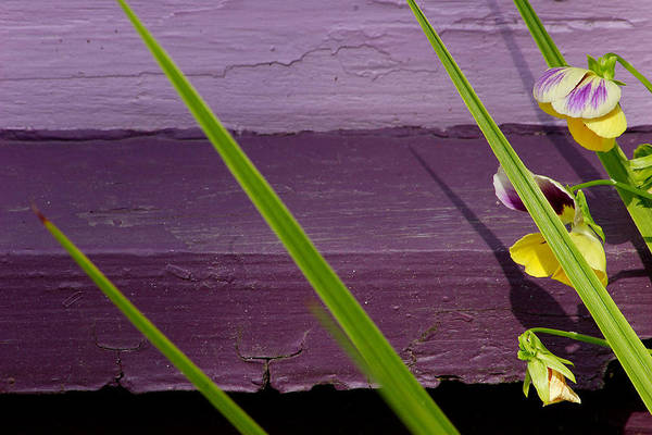 Abstract Art Print featuring the photograph Green On Purple 6 by Art Ferrier