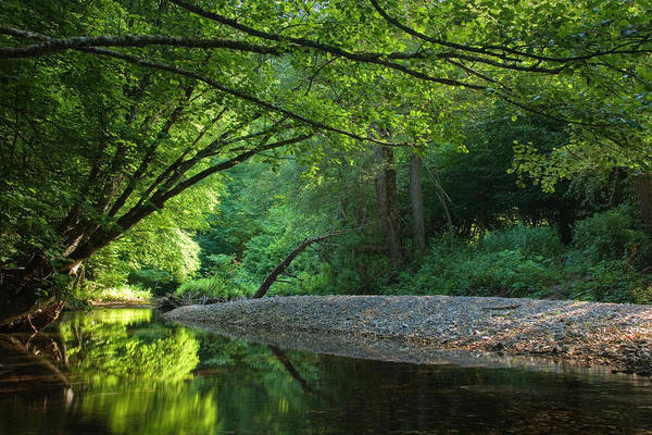 Forest Art Print featuring the photograph Green River by Evgeni Dinev