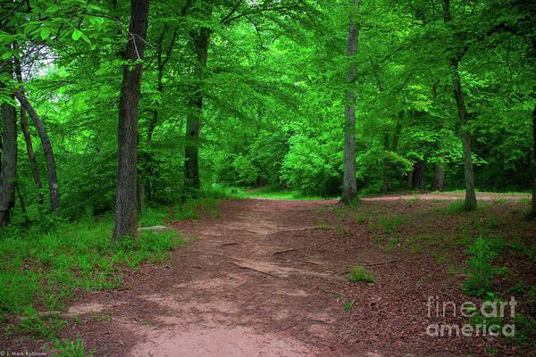 Art Print featuring the photograph Green Trail by Josh-Mark Robinson