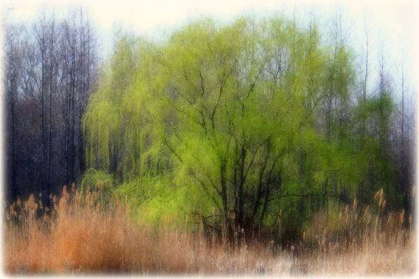 Scenic Art Art Print featuring the photograph Green Tree by Linda Sannuti