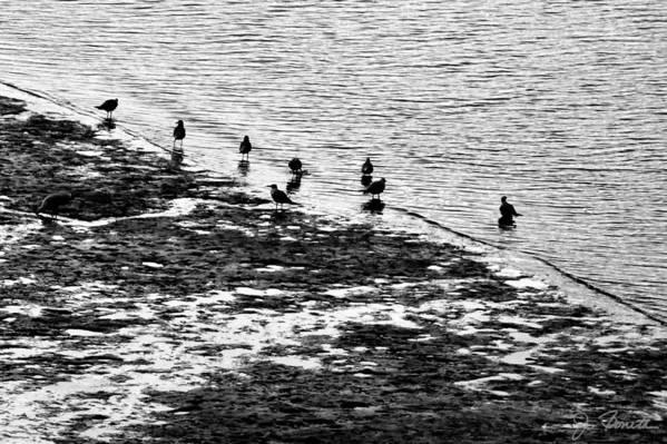 Birds Art Print featuring the photograph Gulls On The Shore by Joe Bonita