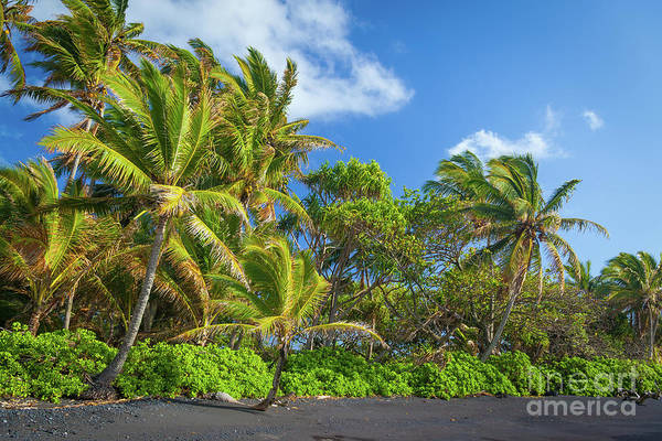 America Art Print featuring the photograph Hana Palm Tree Grove by Inge Johnsson