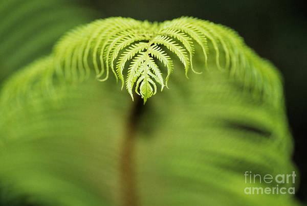 Abstract Art Print featuring the photograph Hapuu Fern by William Waterfall - Printscapes