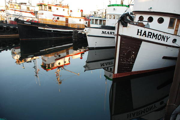 Fishing Art Print featuring the photograph Harmony by Alasdair Turner
