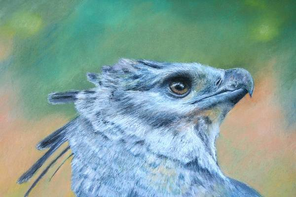 Rainforest Art Print featuring the painting Harpy Eagle Two by Ceci Watson