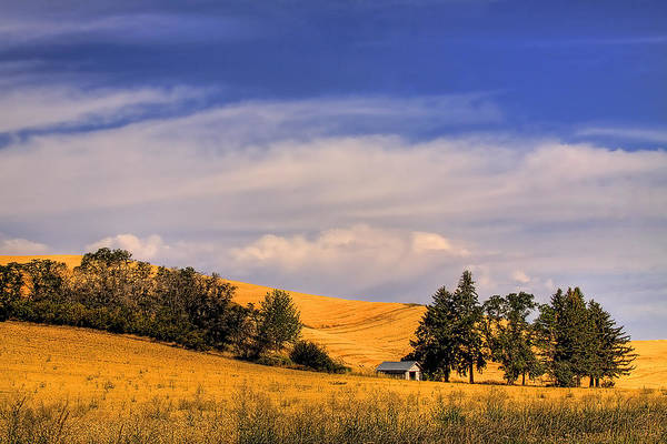 Landscape Art Print featuring the photograph Harvested by David Patterson