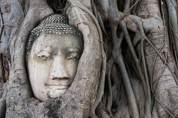 Ancient Art Print featuring the photograph Head Of Buddha Statue In The Tree Roots by Kiyoshi Hijiki