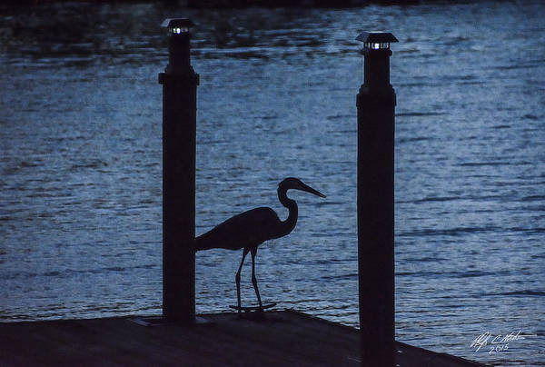 Heron Art Print featuring the photograph Heron At Dusk by Phil Horton
