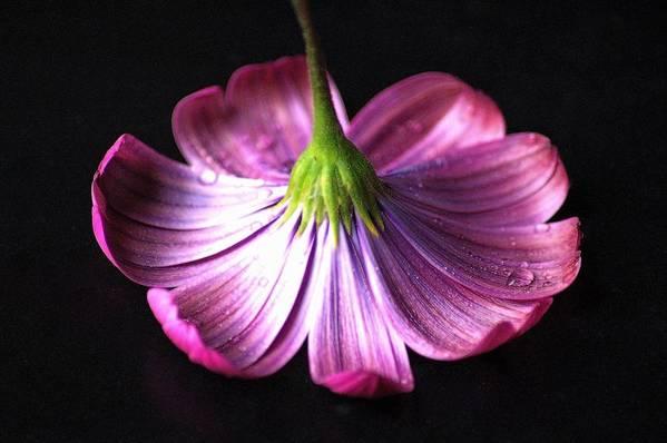 Purple Art Print featuring the photograph Hidden Beauty by Jennifer Englehardt