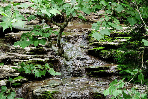 Stream Art Print featuring the photograph Hidden Stream by Wesley Farnsworth