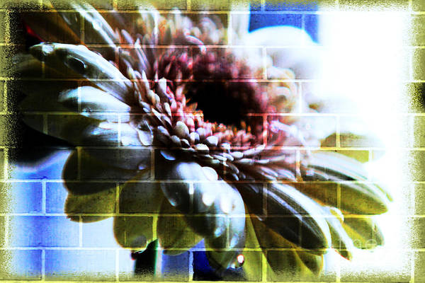 Abstract Flowers Art Print featuring the photograph Hiding In The Shadow by Lori Mellen-Pagliaro