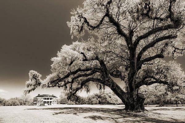 Historic Art Print featuring the photograph Historic Drayton Hall In Charleston South Carolina Live Oak Tree by Dustin K Ryan