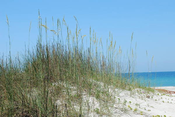 Beach Art Print featuring the photograph Holmes Beach Florida by Lisa Gabrius