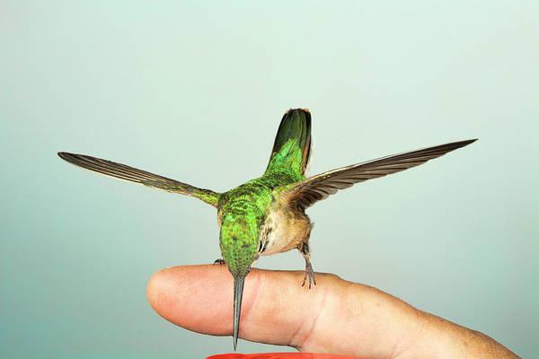 Bird Art Print featuring the photograph Hummingbird On My Finger by Gregory Scott
