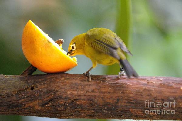 Bird Art Print featuring the photograph Hungry... by Miguel Celis