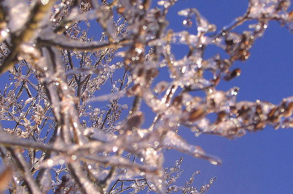 Sky Art Print featuring the photograph Ice Branches by Tammy Bullard