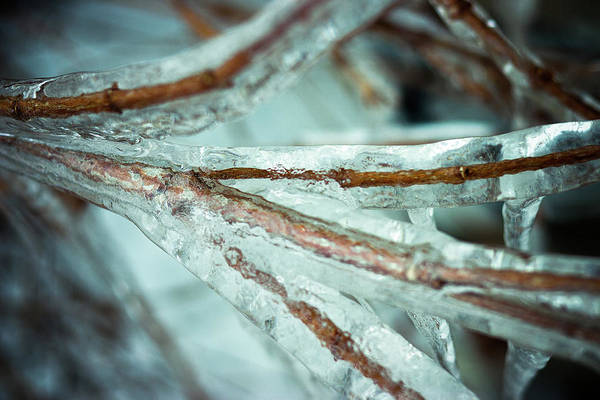 Ice Art Print featuring the photograph Ice Ice Baby by Nikki Nisly