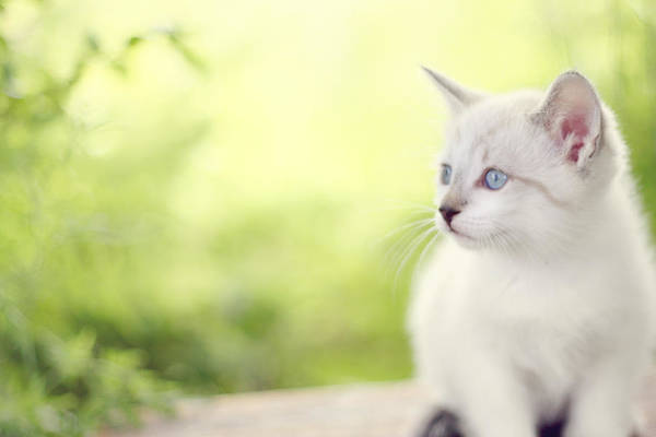 Kitten Art Print featuring the photograph In Her Eyes by Amy Tyler