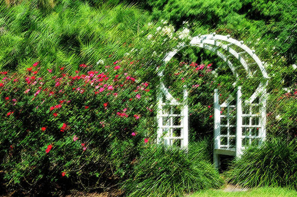 Rose Art Print featuring the photograph In The Garden by Carolyn Marshall