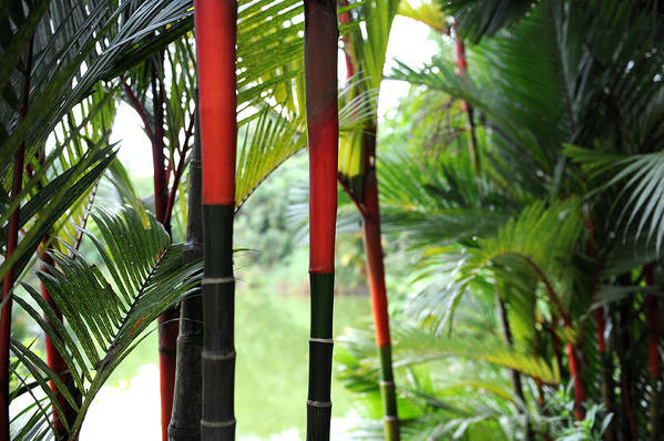Red Art Print featuring the photograph In The Jungle by Jessica Rose