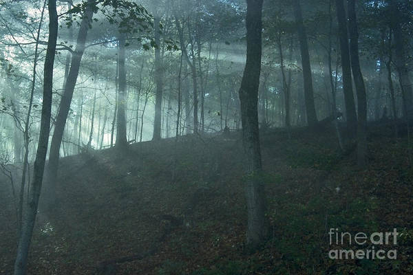 Forest Art Print featuring the photograph Iowa Fog Rays by Sven Brogren