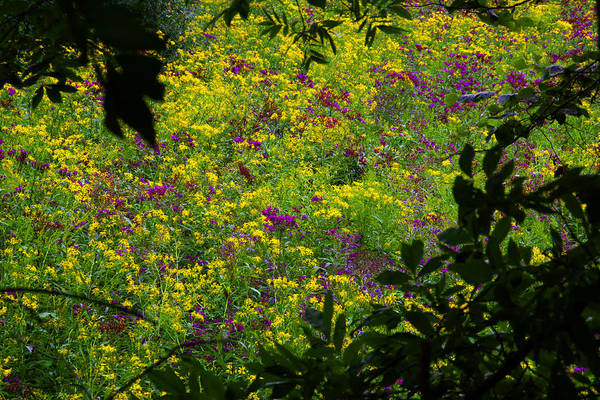 Nature Floral Wildflowers Art Print featuring the photograph Jackson County Wildflowers by George Ferrell