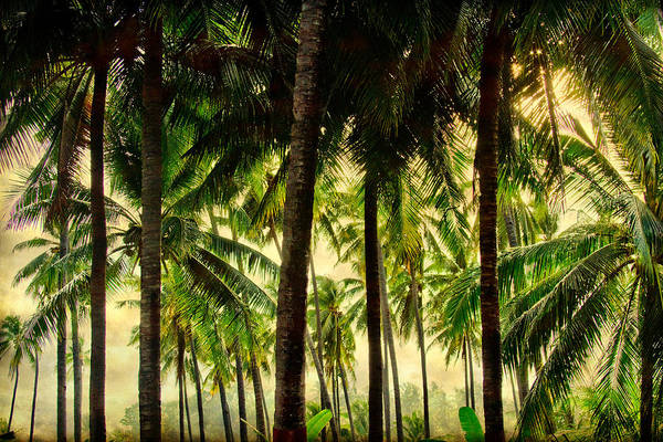Tropical Print featuring the photograph Jungle Paradise by James BO Insogna