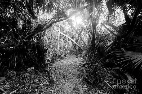 Jungle Art Print featuring the photograph Jungle Trail by David Lee Thompson