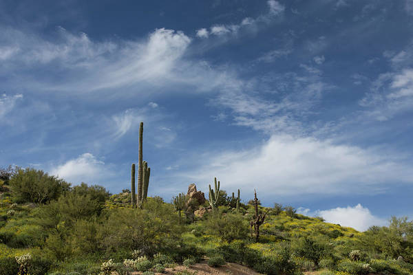 Arizona Art Print featuring the photograph Just A Whisper by Cathy Franklin