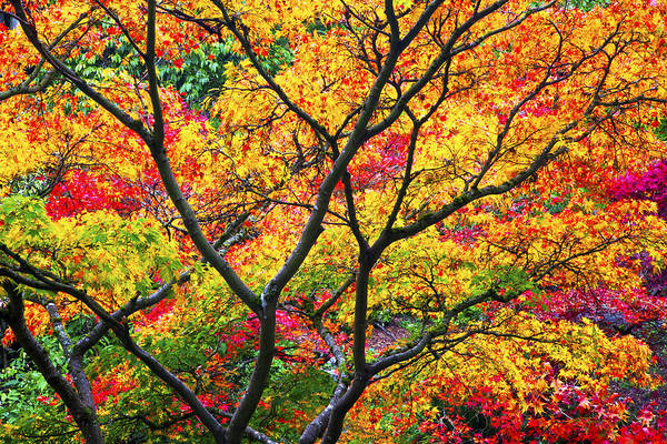 Autumn Art Print featuring the photograph Kaleidoscope Of Autumn Color by Eggers Photography