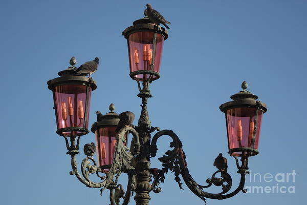 Venice Art Print featuring the photograph Lamp Post In Venice With Pigeons by Michael Henderson