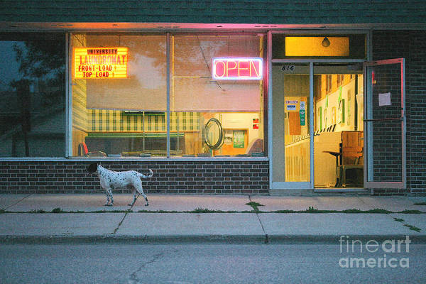 Dog Art Print featuring the photograph Laundromat Open by Steve Augustin